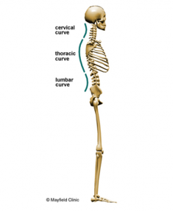 (1) Curvature of the spine